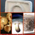 Mushroom transformation